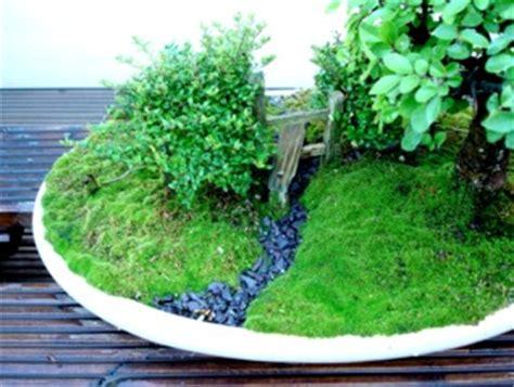 Faire Pousser De La Mousse Vegetale by Cultiver Et Planter Les Mousses D 233 Coratives Au Jardin