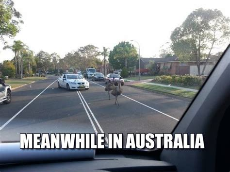 Australian Meme - 27 hilarious australia memes that perfectly describe
