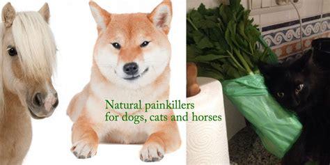 painkiller for dogs cats lone sorensen