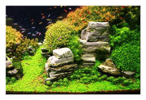 aquascape gallery nano on pinterest aquascaping aga and java