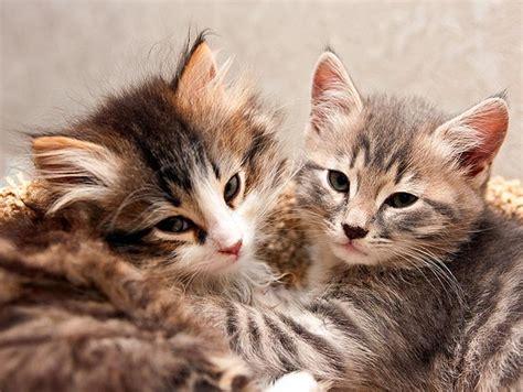 best of cat katter djurbloggen