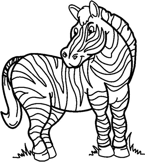 zebras drawing clipart best
