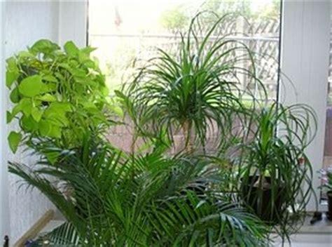 90 luftfeuchtigkeit im schlafzimmer zimmerpflanzen positive effekte auf raumklima und gesundheit