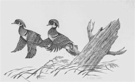 duck boat drawing wood duck pencil drawing
