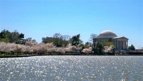national cherry blossom festival national cherry blossom festival wikipedia