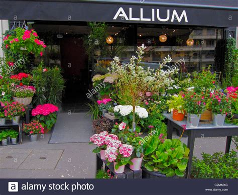 flower shop in paris paris france they display all paris france french flowers and household potted plants