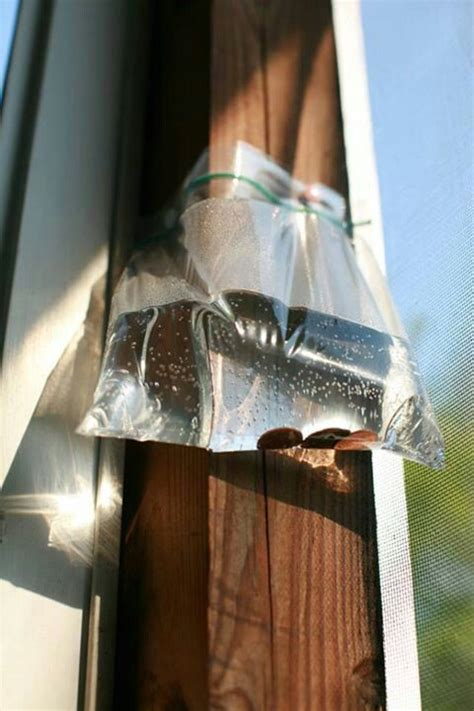 Keeping Flies Away From Patio by 1000 Ideas About Keeping Flies Away On Flies