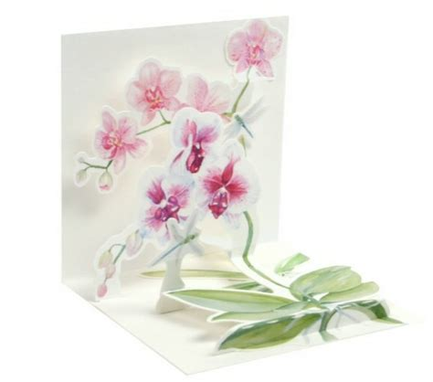 orchids and watercolor 95th birthday startseite1 2 3 geburtstag