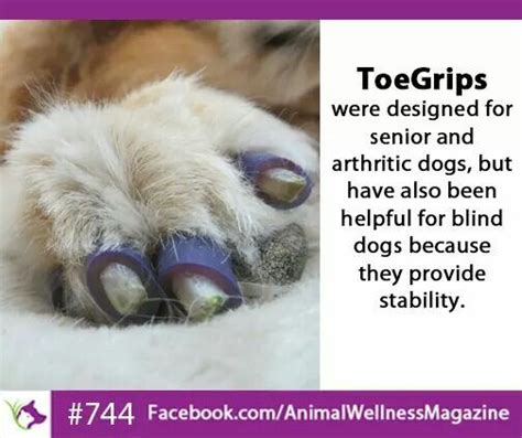 toe grips 17 best images about dogs emergency treat recipes etc on for dogs