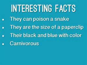 blue poison dart frog by mrs kauffman s class