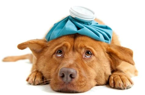 how to tell if a puppy is sick sick puppy 5 tell signs your needs an animal