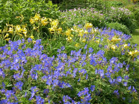 Plant Sale To Help Cruickshank Botanic Garden Flourish Botanic Garden Plant Sale