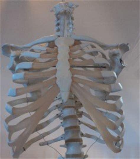dolore gabbia toracica posteriore fractura de costillas fisura sintomas tratamiento y