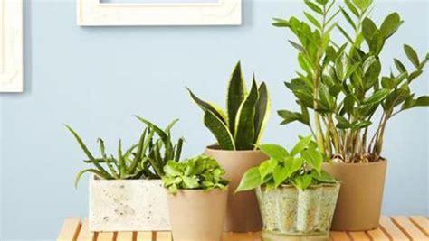piante da interno purificano l le migliori 5 piante purificano l dallo smog