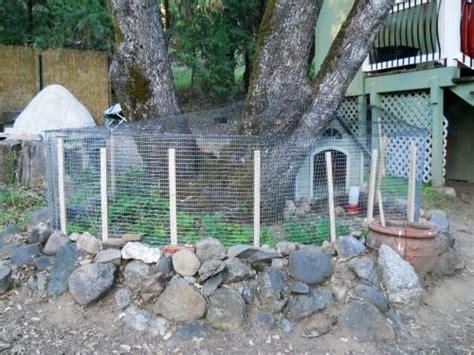 Backyard Quail Farming 1000 Images About Quail On Chicken Eggs
