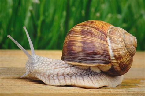 el caracol despistado que 191 d 243 nde viven los caracoles