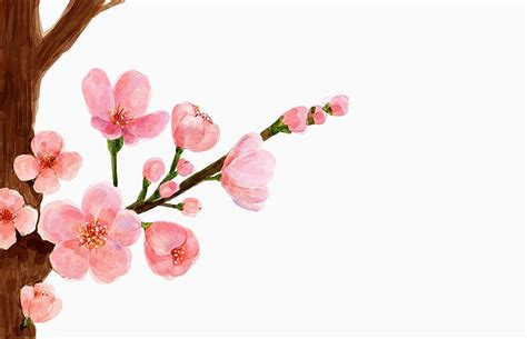 fiore di pesco rosa fiori di pesco rosa il fiore di pesco caldo bianco