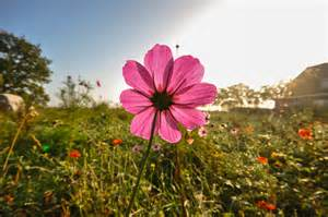 flower images free stock photo of botany field flower