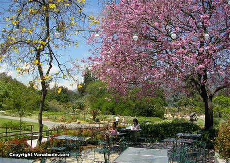 Botanical Gardens In La Los Angeles Arboretum Botanic Gardens California