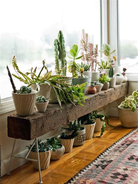 apartment plants ideas 25 best ideas about house plants on plants