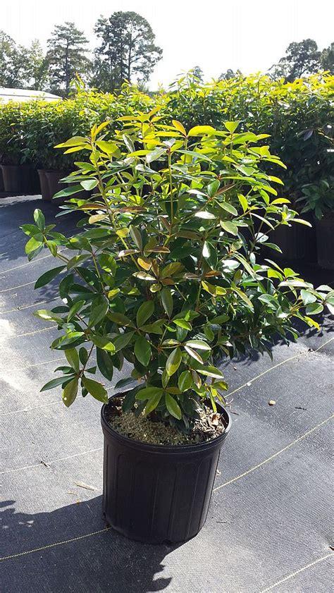 plant ceaux plantantcom