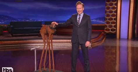 conan heal divided nation   tall dachshund rolling stone