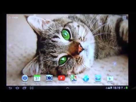 cat  wallpaper apps  google play