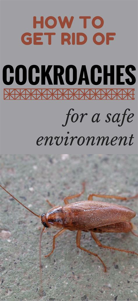 how to get rid of cockroaches in kitchen cabinets magnificent how to get rid of roaches in the kitchen photo