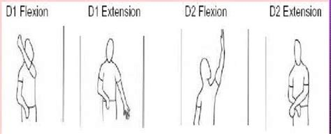 pnf pattern video pnf d1 d2 flexion extension ot board exam study tools