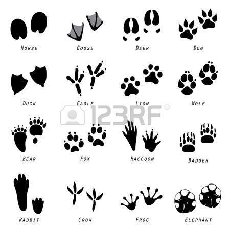 printable animal tracks flashcards les 14 meilleures images 224 propos de animal empreintes