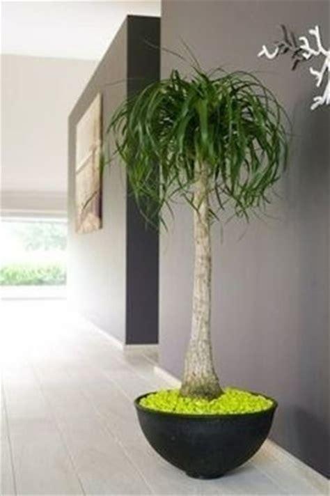 piante decorative da interno piante da appartamento resistenti piante appartamento