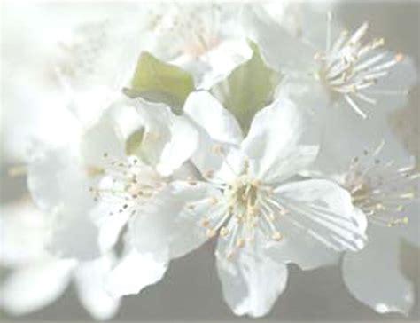 fiori di bach preparazione preparazione personalizzata fiori di bach farmacia borgo