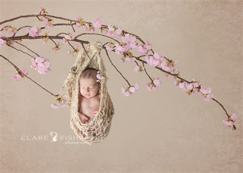 Cherry Decorations For Home a caucasian baby in a knit cocoon hanging from a branch of