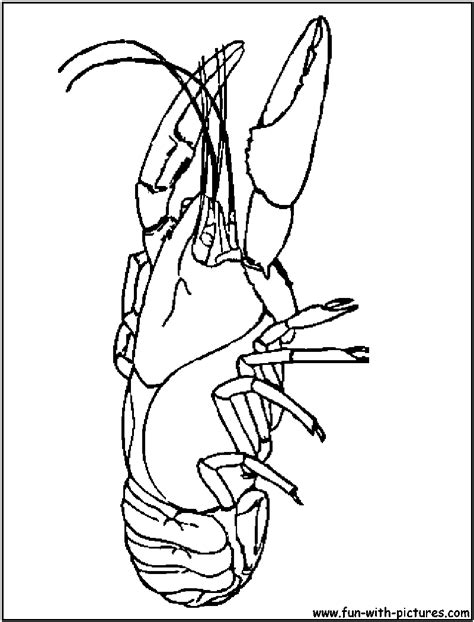 Crayfish Coloring Sheet Coloring Pages Crayfish Coloring Page