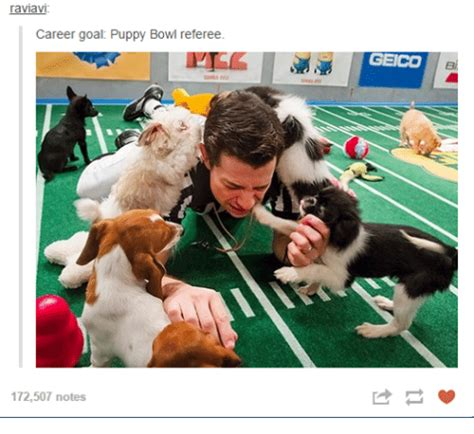 puppy bowl referee 25 best memes about goals puppies and goals puppies and memes