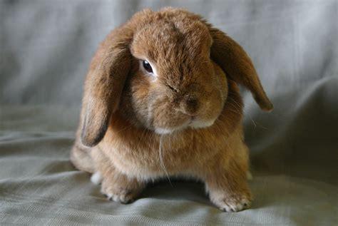 Small Home Animals Jaya One International Rabbit Show On 20 April Jaya1