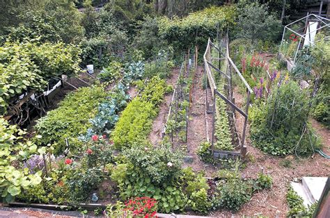 hillside vegetable garden garden ftempo