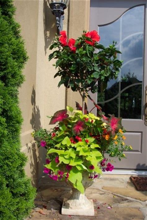 landscape  jennyhardgrave topiary   pot flower