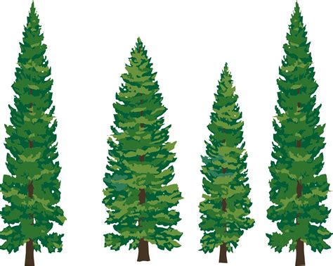 tats on pine tree tattoo pine tree and pine cliparts