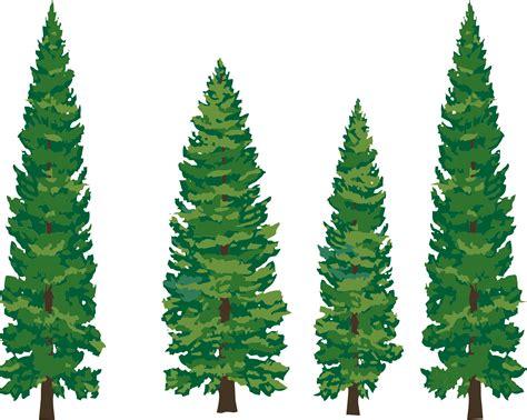 tats on pine tree tattoo pine tree and pine cliparts