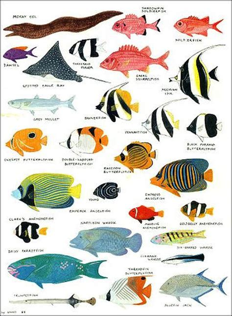 bands with a color in their name types of fishes and their names