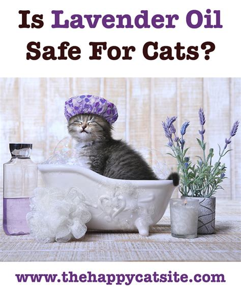 is lavender safe for dogs lavender for cats fleas cats