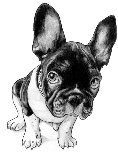 french bulldog by mithferion on deviantart