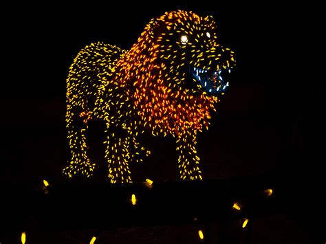 The Phoenix Zoolights Pictures And Video Pheonix Zoo Lights