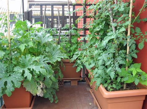 orto terrazzo orto in balcone giardino in terrazzo come realizzare