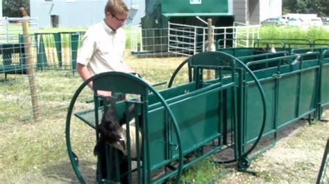cattle hoof trimming table for sale lakeland group sheep and goat deluxe spin trim chute in