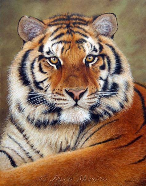Painting Tiger tiger paintings and prints for sale