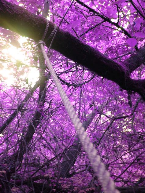 purple leaves by ex magician on deviantart