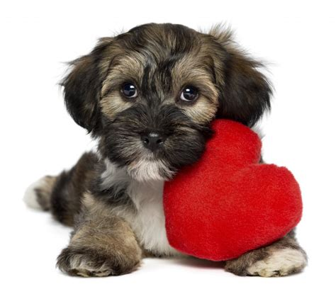 valentines puppy through letters quotes to brighten your s day