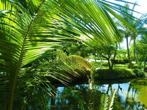 gardens picture of excellence punta cana punta cana